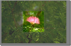 Picasa Tip: Resizing a Picture's Height and Width (2/5)