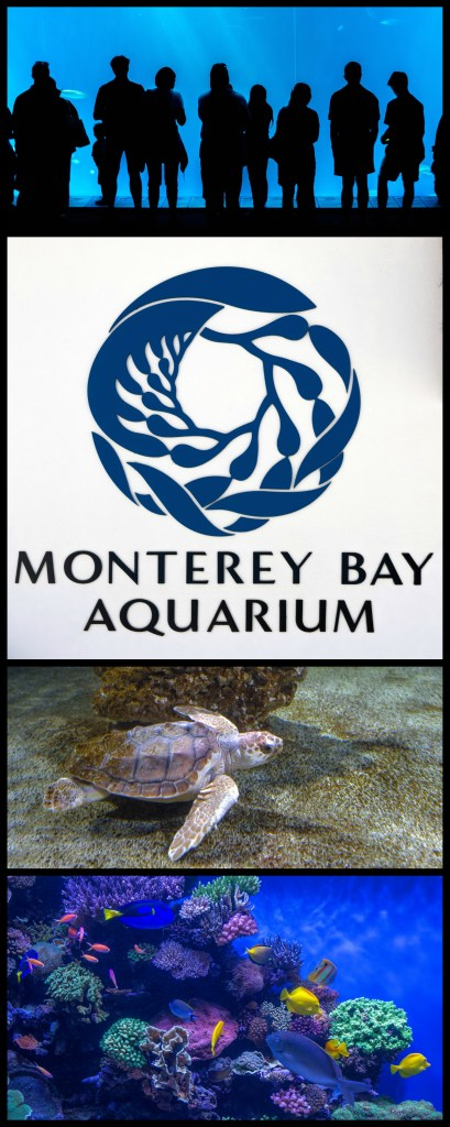 Monterey Bay Aquarium Blog