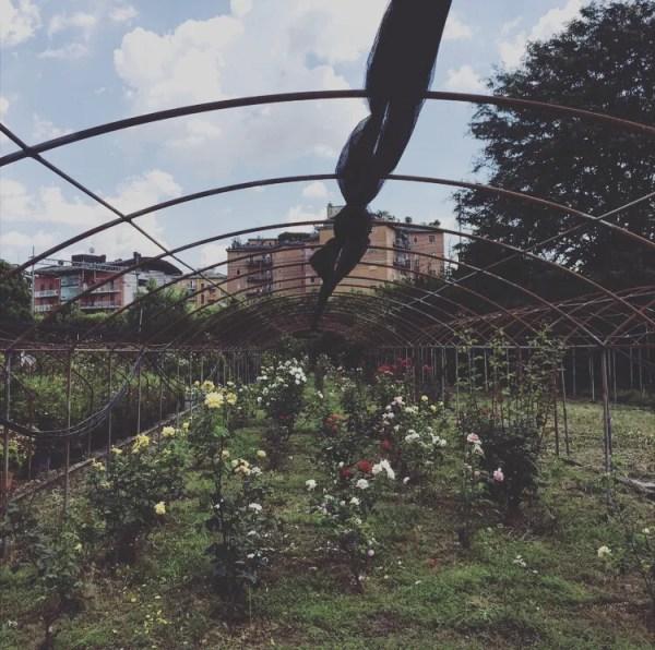 Floricoltura Redaelli Dergano