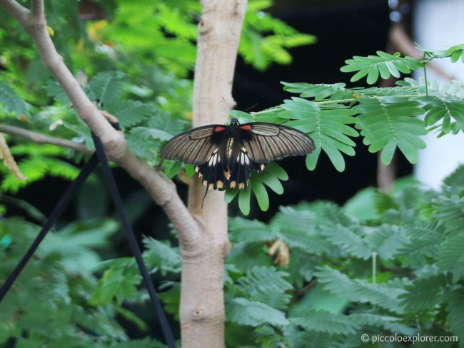Whipsnade Zoo Butterfly House