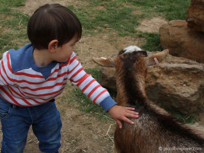 Hullabazoo Petting Zoo