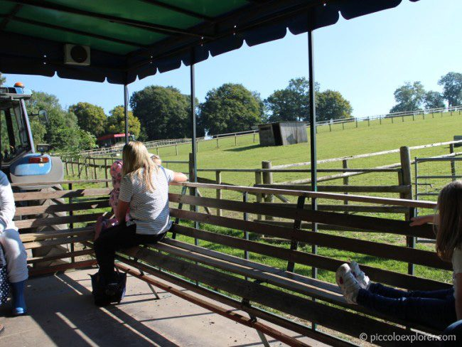 Tractor Ride at Bocketts Farm Park Surrey