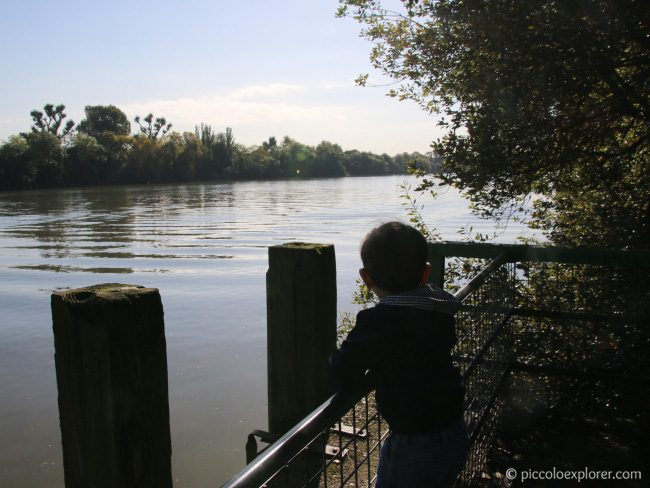 Riverside View, Dukes Meadows Thames Path