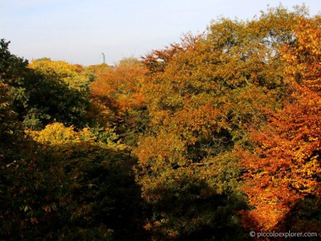 View from Treetop Walkway at Kew Gardens