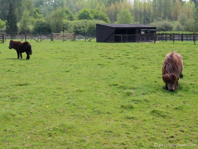 Ponies at Birdworld