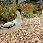 A Day Out at Birdworld