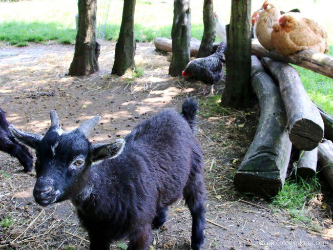Hobbledown Farm Park Epsom Surrey