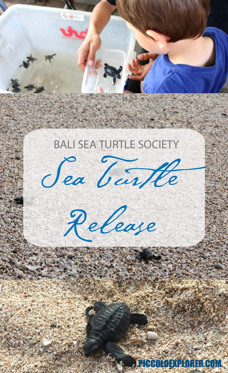 Turtle Release at Kuta Beach with the Bali Sea Turtle Society