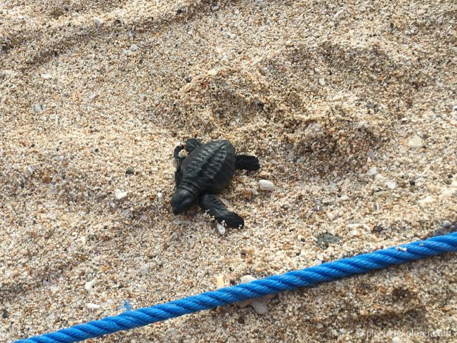 Sea Turtle Release - Kuta Beach Bali