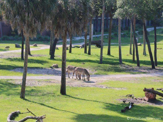 Savanna View Room at Disney's Animal Kingdom Lodge, Orlando