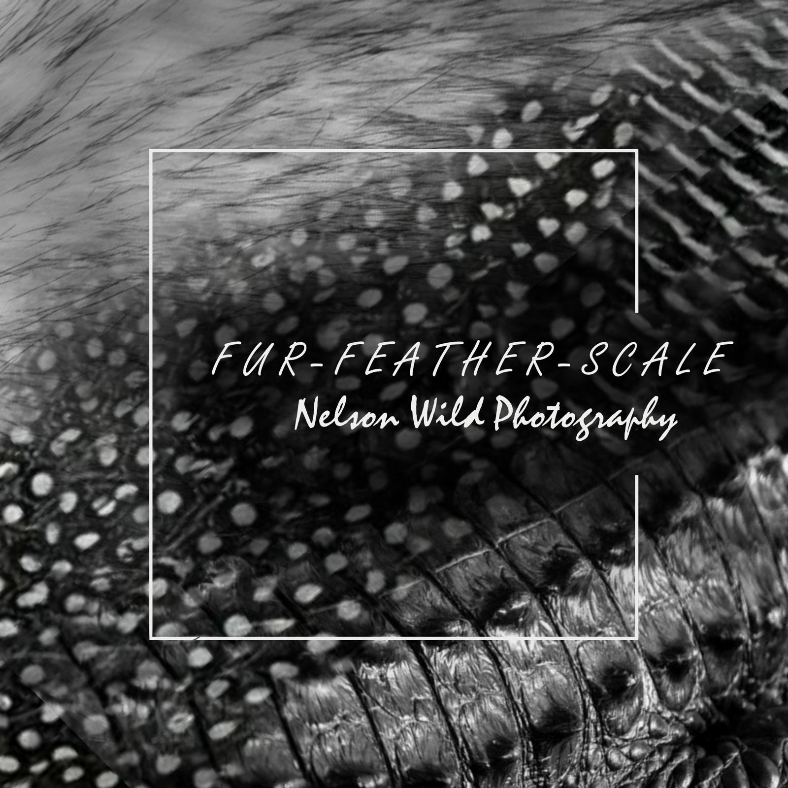 Fur, Feather and Scale Photography