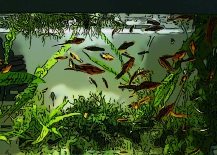 What Are The Benefits Of Keeping A Fish Aquarium At Home?