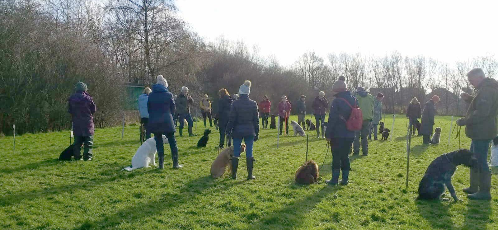 obedience training at the field with a big group