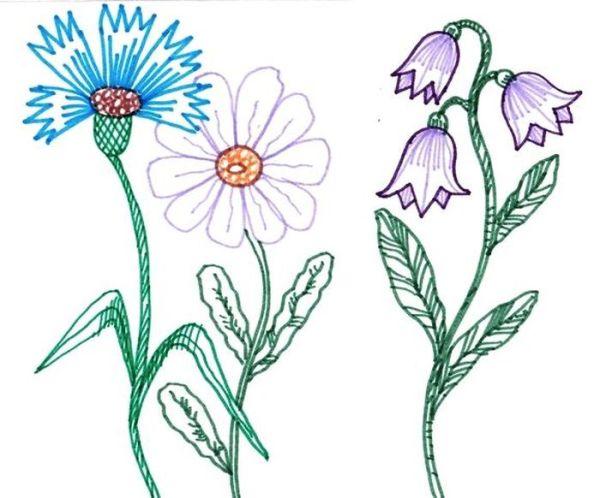 Картинка красота растений на урок окружающий мир.