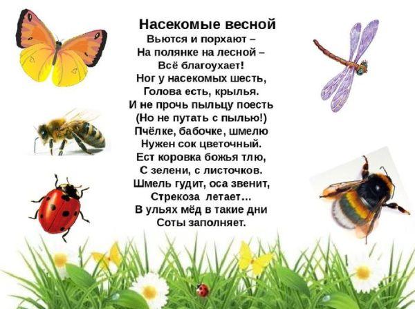 Картинки весной появляются насекомые для дошкольников