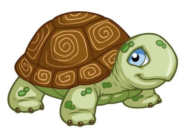 Черепаха рисунок для детей. Легкие срисовки для школьников.