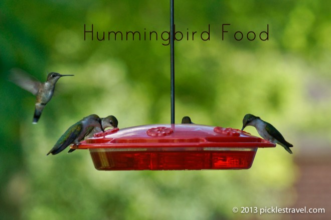 How Long Can You Keep Hummingbird Food In The Fridge
