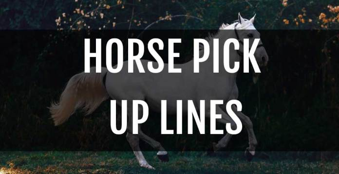 horse pick up lines