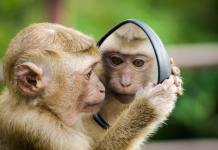 monkey Pick Up Lines
