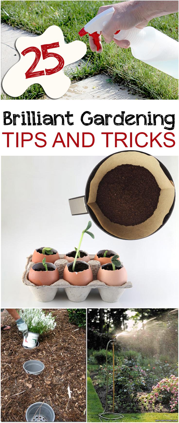 25 BriGardening, gardening hacks, gardening tips, easy gardening tips, popular pin, outdoor living, indoor gardening, easy gardening, organic gardening.lliant Gardening Tips and Tricks