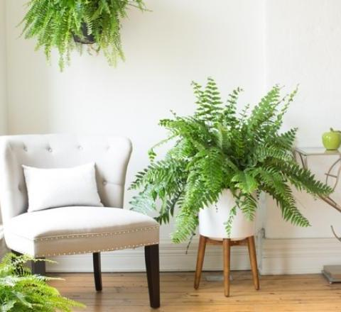 Bedside Plants for Better Sleep| Indoor Gardening, Indoor Gardening TIps and tricks, Gardening, Bedside Gardening, Sleep Hacks #SleepHacks #IndoorGarden