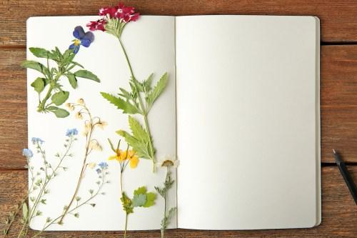 press petals | pressed flowers | pressed petals | flowers | pressed flower petals | petals | crafts