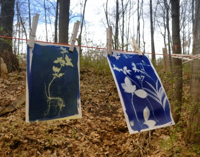 photograms drying on the line