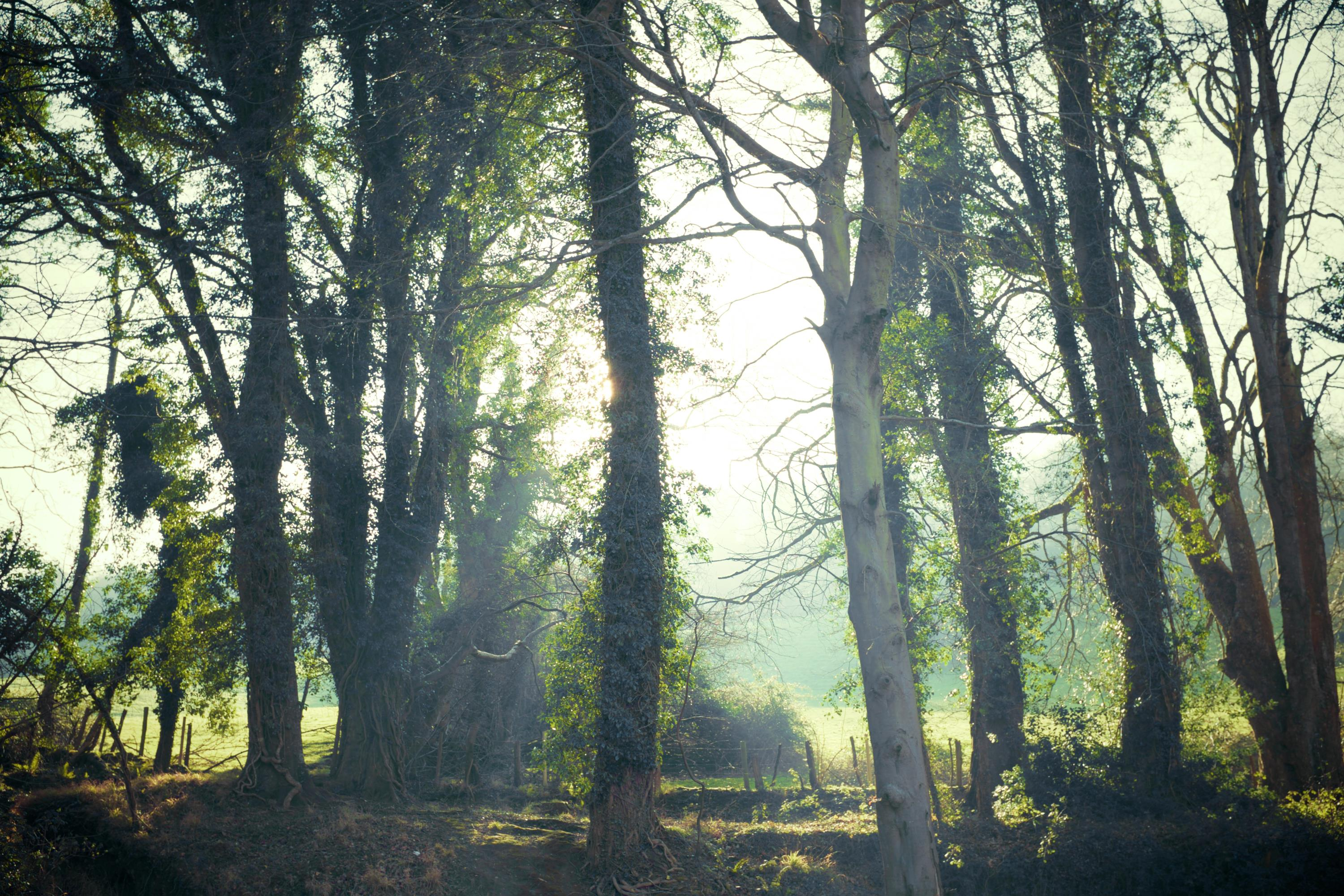 Enchanted Forest Picography Free Photo