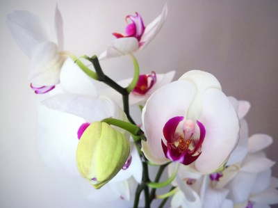 Day 351 – Orchid cascade