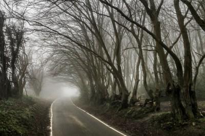 Day 152.2 – Misty lanes