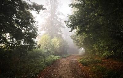 Day 354.2 – Misty morning