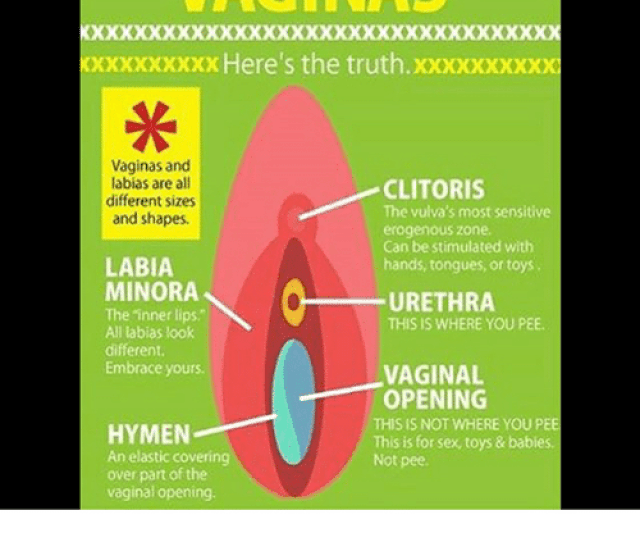 All About Vaginas Xxxxxxxxx Heres The Truthxxxxx Xxxx Vaginas And Labias Are All Clitoris Different Sizes The Vulvas Most Sensitive And Shapes Erogenous