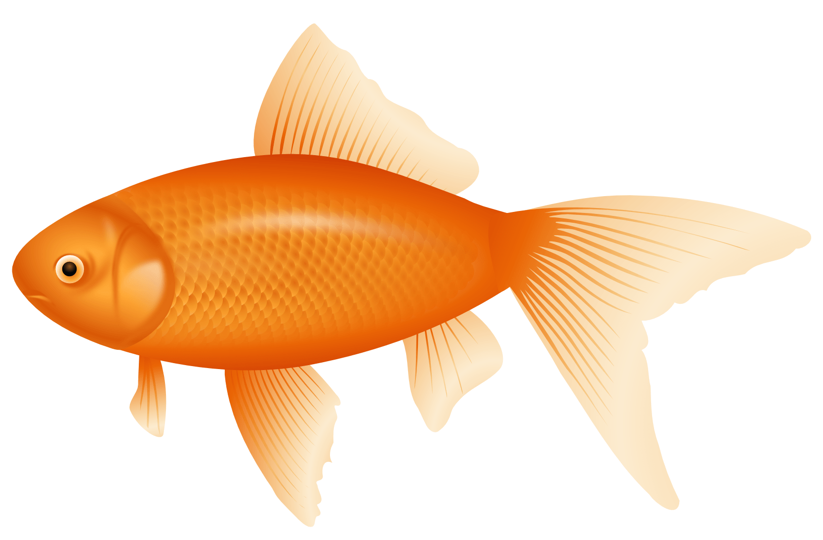 Orange Fish PNG Clipart Best WEB Clipart