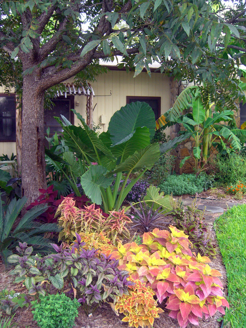 """Landscaping photo of """"Tropical Garden"""" posted by searlsbegy on Tropical Backyard Landscaping  id=75051"""
