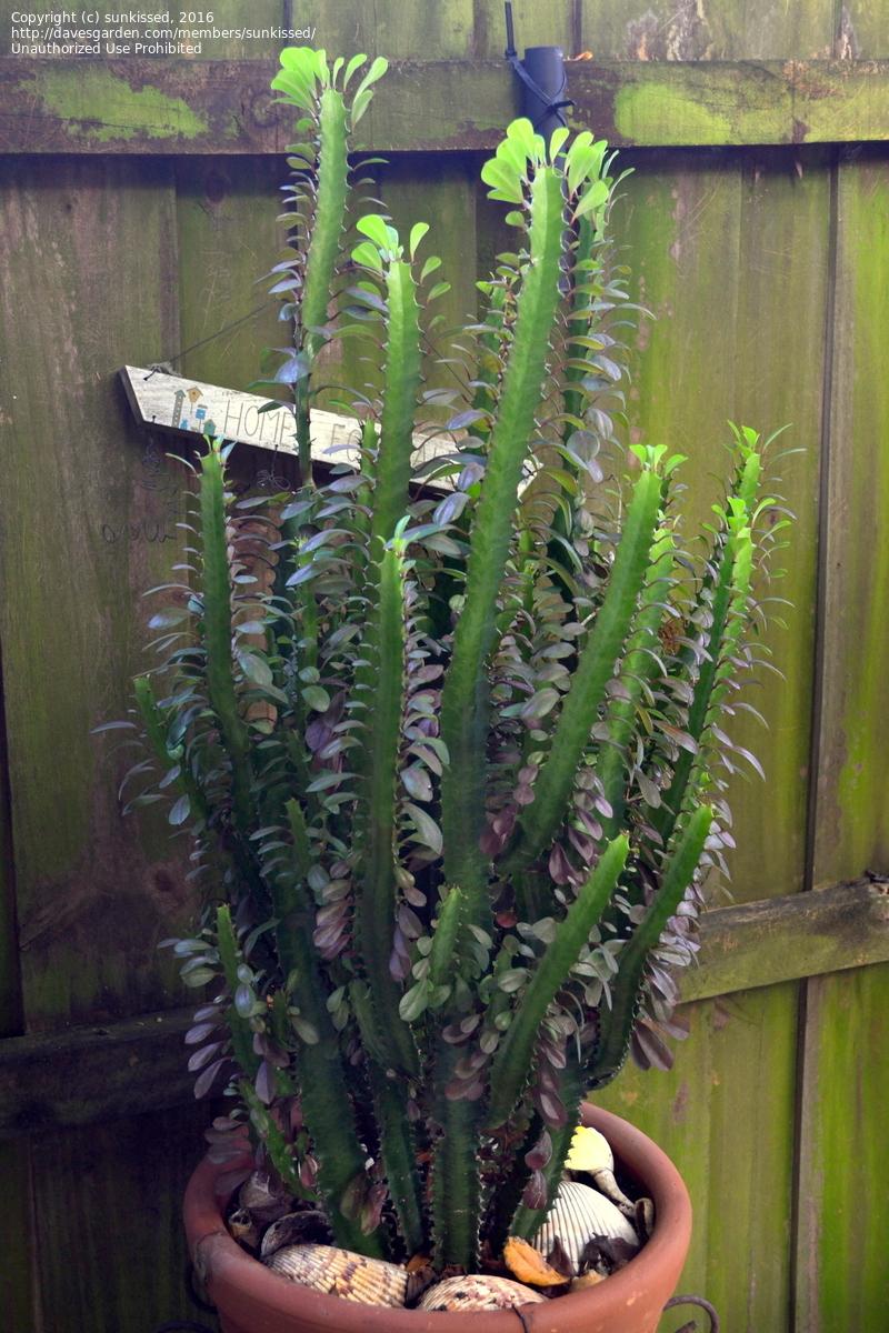 Cheap Cactus Plants Sale