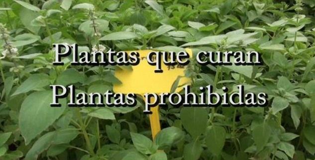 https://i1.wp.com/pics.filmaffinity.com/plantas_que_curan_plantas_prohibidas-480855834-large.jpg