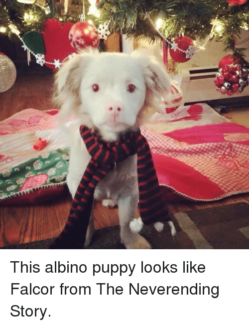 25 Best Memes About Albino Albino Memes