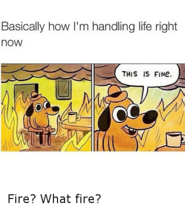 Image result for dog this is fine