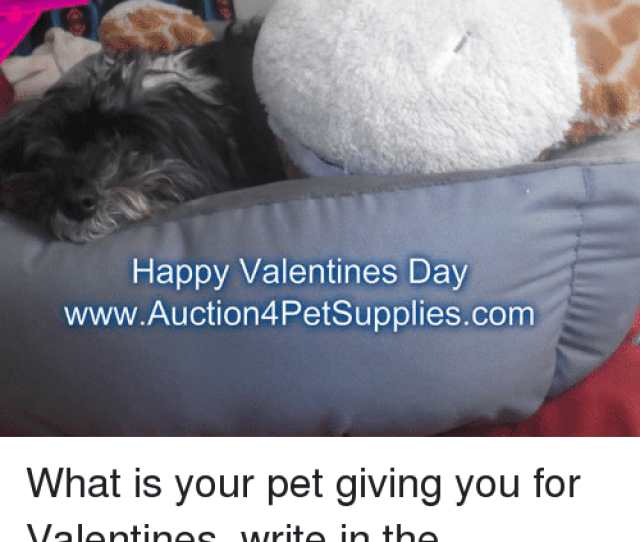 Memes Valentines Day And Happy Happy Valentines Day Www Auctionpetsupplies Com