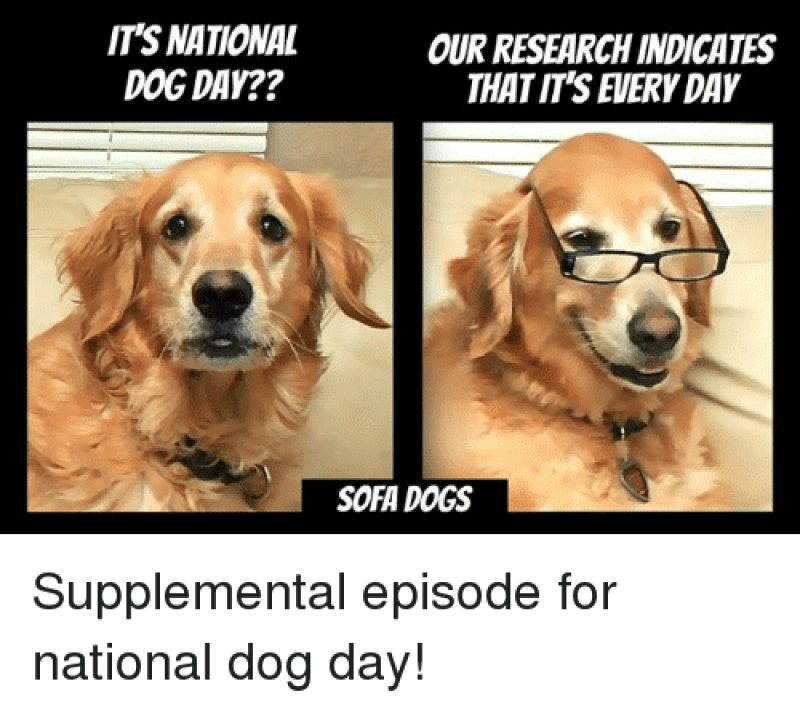 IT'S NATIONAL DOG DAY?? OUR RESEARCH INDICATES THAT IT'S EVERY DAY SOFA DOGS  Supplemental Episode for National Dog Day!   Dogs Meme on ME.ME