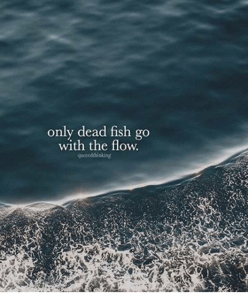 Only Dead Fish Go With The Flow Quotedthinking Meme On Me Me