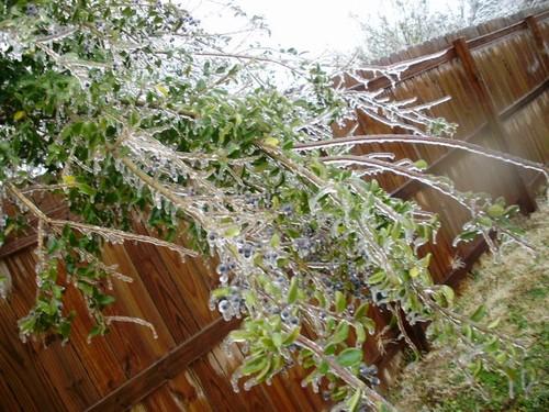 Lonoke AR Fallen Tree Branch Due To Ice Storm Photo