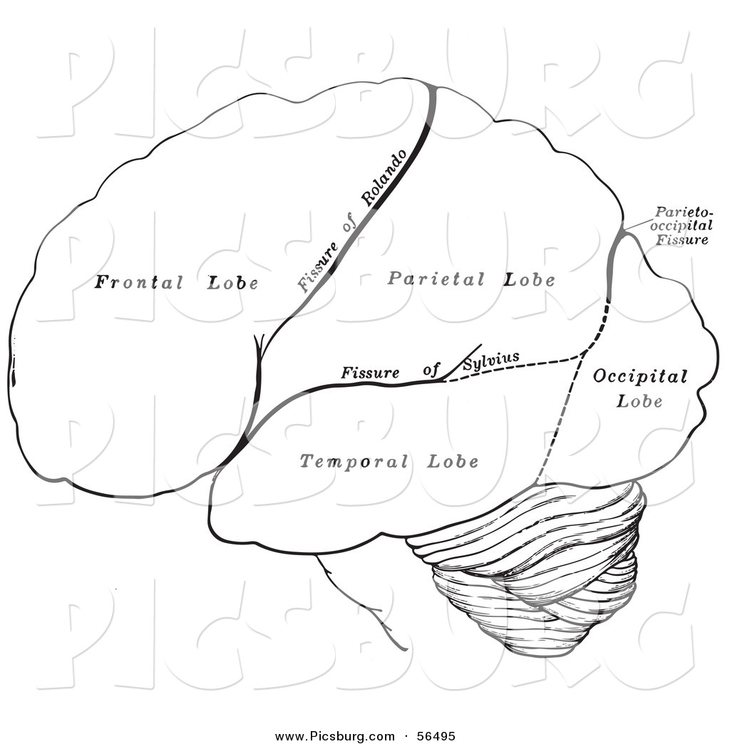 Black Brain Coloring Pages