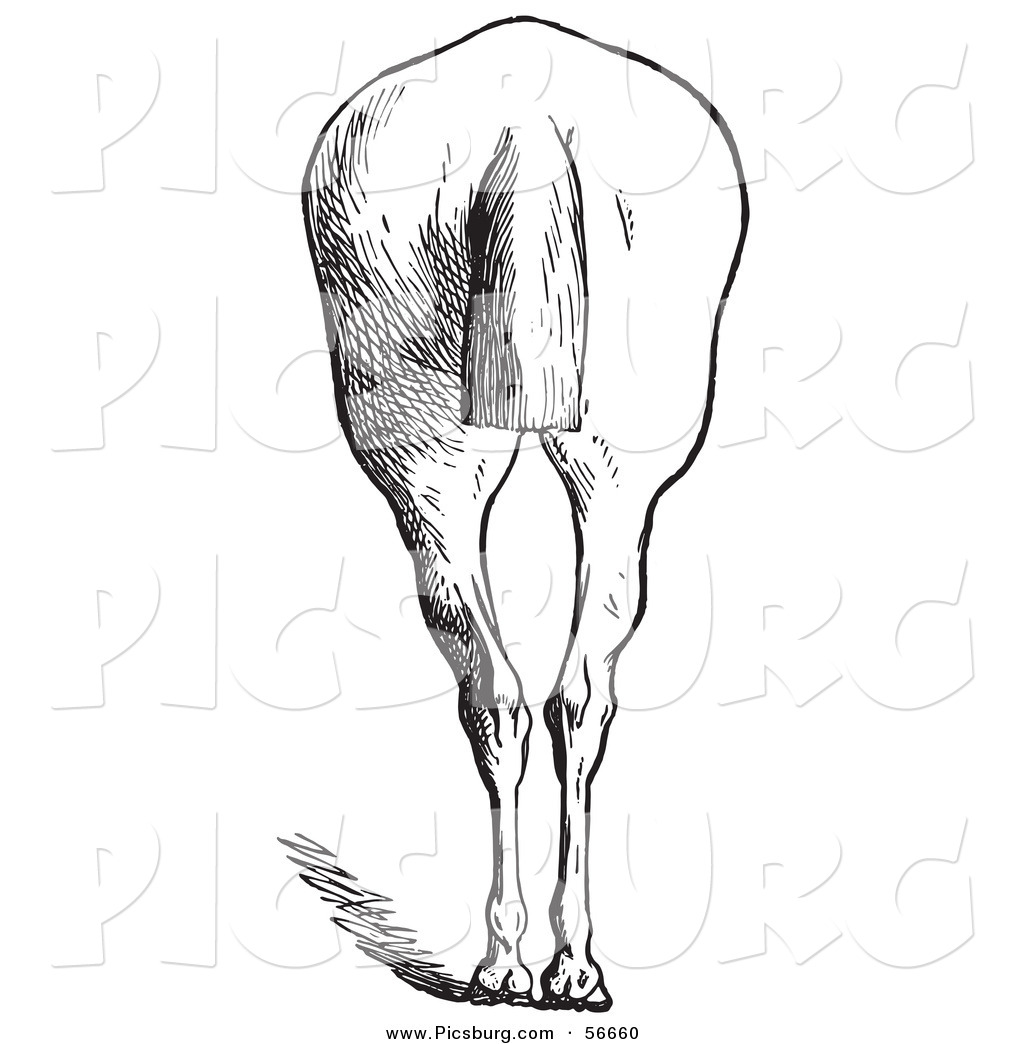 Royalty Free Horse Stock Designs