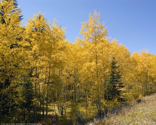 Природа, Осень - Красивые фото обои для рабочего стола ...