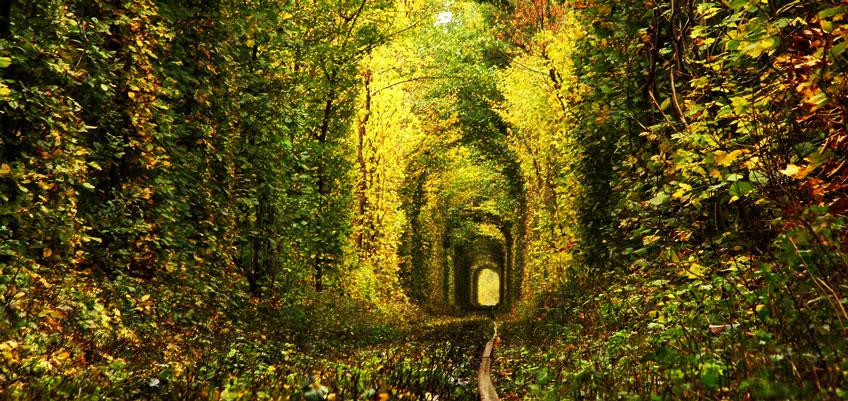 fairy-tale-tunnel-fall-wallpaper-tunnel-of-love-in-kleven-ukraine
