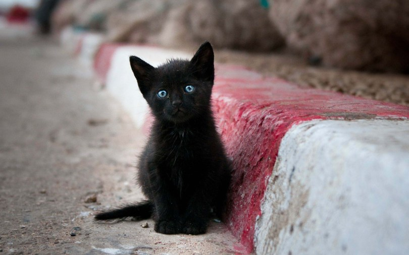 a-black-cat-with-blue-eyes-next-to-the-sidewalk