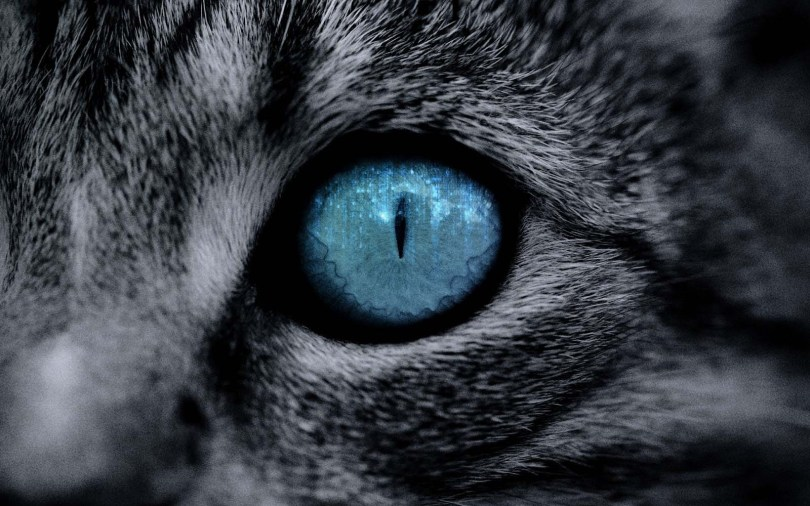 amazing-eyes-by-gorgeous-a-cat-hd-wallpaper