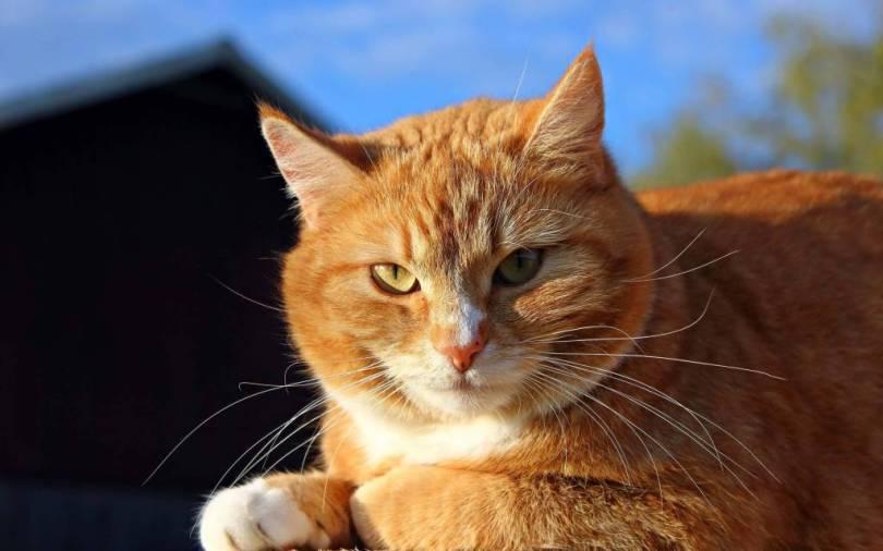 Amazing & Nice Cat Looks At Us Through The Camera Full Hd Wallpaper