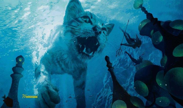 Angry White Tiger Underwater Full Hd Wallpaper